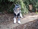 Wolf_Link_Costume_view_1_by_LilleahWest.jpg