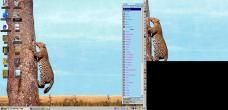 19990227-Leopardtree.jpg