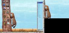 19990227-Leopardtree2.jpg