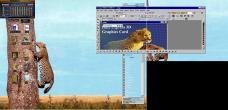 19990227-Leopardtree3.jpg